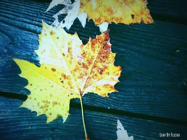 Leaf By Flicka