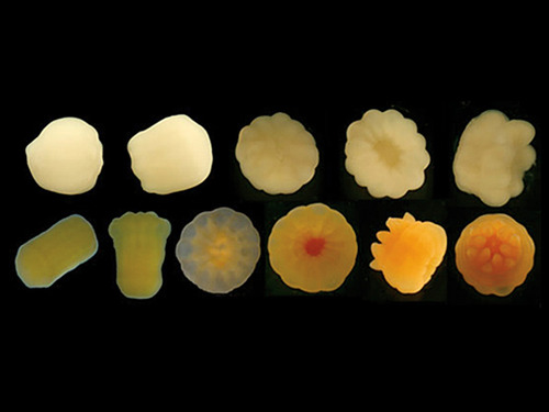 Coral Baby Pictures
